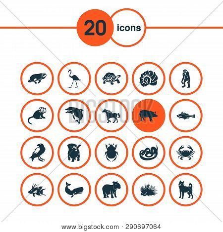 Zoo Icons Set With Dog, Marmoset, Porcupine And Other Pussy Elements. Isolated Vector Illustration Z