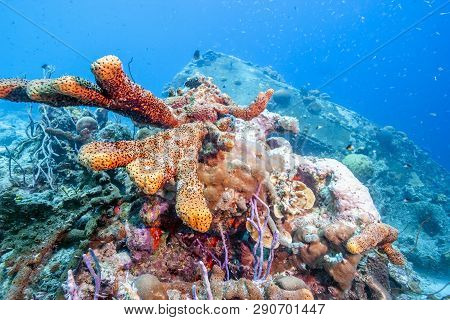 Coral Reef Off The Coast Of The Island Of Bonaire