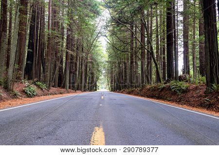 View Of A Road Passing Through Humboldt Redwoods State Park With Redwood Trees Visible On Either Sid