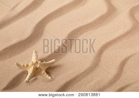 Starfish or seastar on the seashore of a rippled summer sandy beach