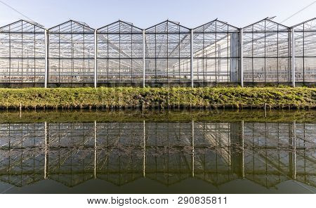 Maasdijk, The Netherlands - February 25, 2019: Great Industrial Flower Greenhouse With Working Man I