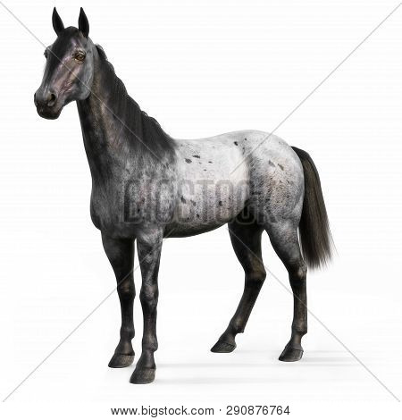 Blue Roan Horse On A White Background. 3d Rendering