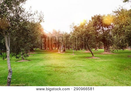Without Any Doubt, The Most Outstanding Attraction Of San Isidro Is The Olivar Forest, Which Is Not