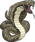 A Cobra snake about to strike illustration poster