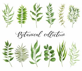 Botanical Collection Painted Markers On White Background. You Can Use For Greeting Cards, Posters An