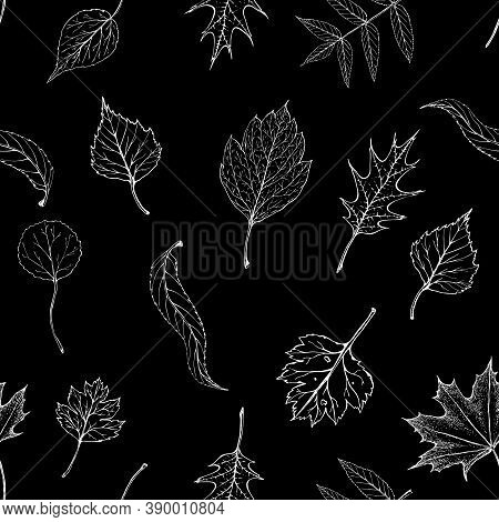 Seamless Autumn Chalk Leaves Pattern On Black Chalkboard. Fall Leaves Endless Background. Foliage Si