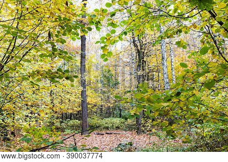 View Of Clearing In Forest Between Trees In City Park On Autumn Day