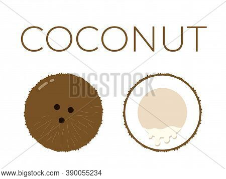 Vector Of Coconut And Sliced Half Of Coconut On White Background