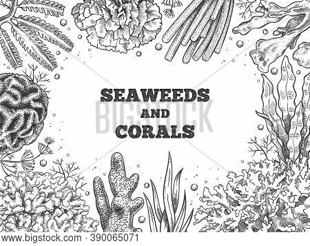 Seaweed Background. Reef Aquatic Weed And Corals, Underwater Ocean And Aquarium Life. Marine Japanes