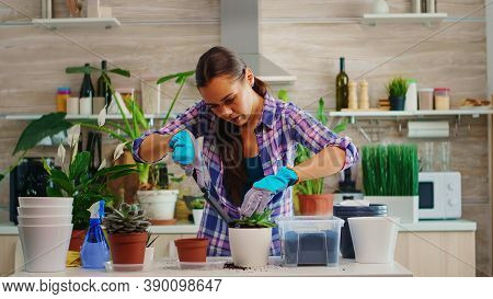 Woman Home Gardening In The Morning In Cozy Kitchen Making Mess On Table. Florist Replanting Flowers