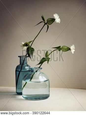 Still Life With Two Silene Vulgaris Flowers (bladder Campion Or Maidenstears) In The Small Glass Vas
