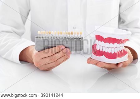Doctor Showing An Anatomical Model Of Human Teeth And Teeth Whitening Palette Dental. Teeth Whitenin