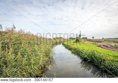 Reed Plants Along A Watercourse In A Typical Dutch Polder Landscape. The Photo Was Taken On A Cloudy