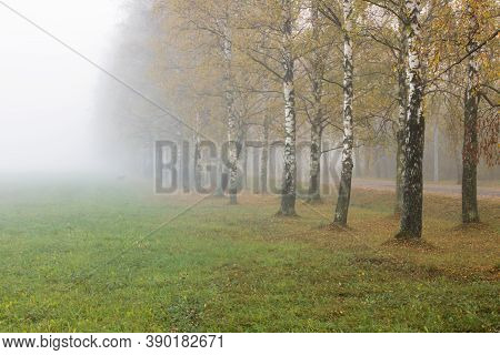 Glade And Yellow Autumn Trees In Fog