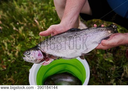 River Fish In The Mud-stained Hand. Close Up Of Freshly Caught Fish River Roach.closeup Of The Hands