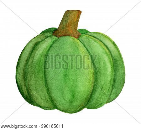 Nice Green Pumpkin. Winter Squash Harvest. Autumn Watercolor Gourd Vegetable Isolated On White Backg