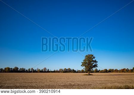 A Solitary Tree Stands In The Middle Of A Farmer's Field In Autumn, With The Crops Already Harvested