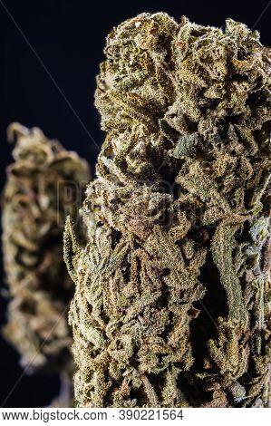 Dried Medical Marijuana Bud. Cannabis Flower Strain. Indica, Sativa, Hybrid. Weed Flower. Pictures F