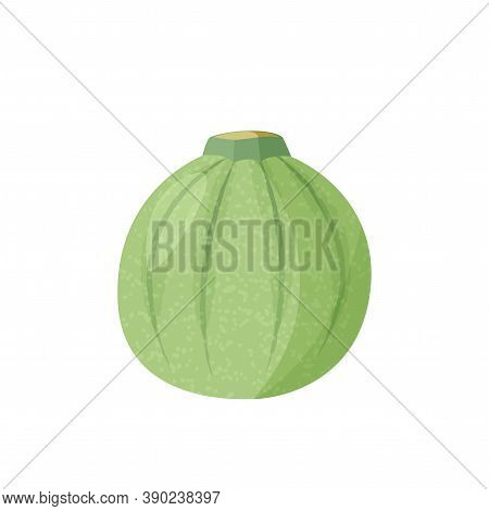 Green Round Squash Isolated On White Background. Vector Realistic Illustration.