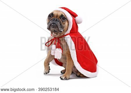 French Bulldog Dog Wearing A Red Christmas Santa Cape Isolated On White Background