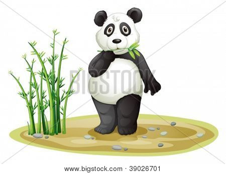 illustration of a panda on a white background