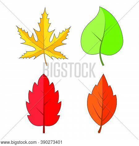 Autumn Leaves Set Isolated On White. Colourful Falling Leaf Collection. Yellow, Orange, Red, Green,