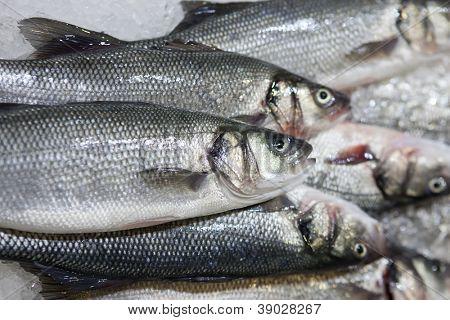pescado fresco en el hielo en el mercado
