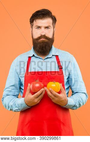 Farm Market Concept. Organic Crops. Tomato Diet. Chef Cook With Tomato Vegetables. Bearded Man Cook