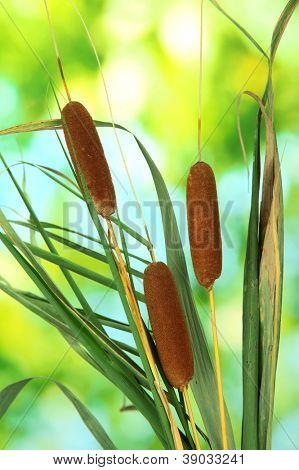 reeds on green background