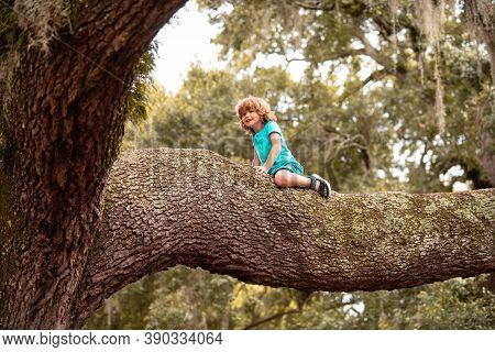Little Cute Boy Kid Climbing On Tree Hight Outdoor Child Lifestyle Concept