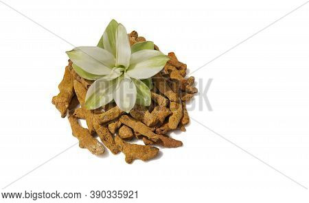 Dry Turmeric Roots With Turmeric Flower Isolated On White Background With Copy Space For Texts Writi
