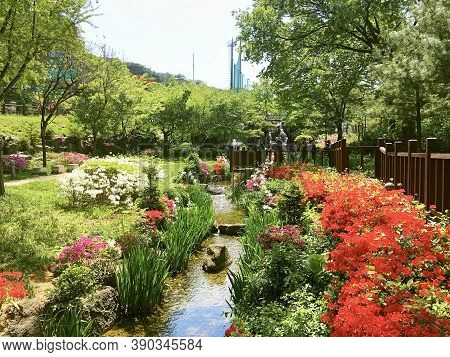 Seoul, South Korea - April 29, 2017: Changchungdan Park in downtown during the spring season. Flower