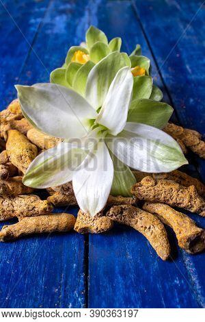 Closeup Of Turmeric Flower With Dry Turmeric Roots Isolated On Blue Wooden Background In Vertical Or