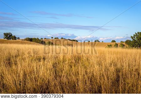 Meadow Nature Landscape. Meadow Grass Landscape. Summer In Mountain Meadow Landscape. Trees And Gras