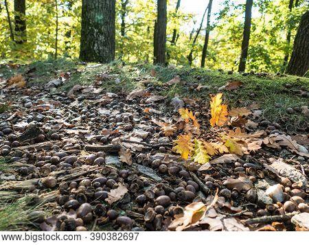 Beautiful Magical Natural Wood Scene