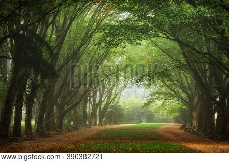 Beautiful Alley In The Autumn Park And Alley