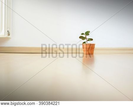 Minimalism Apartment - Only A Small Plant In The Apartment