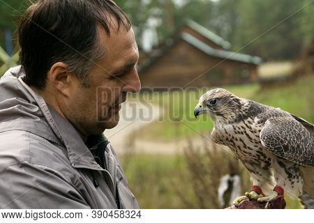 Kashino, Russia - 10 11 2020: Falcon Trained For Falconry And Trainer