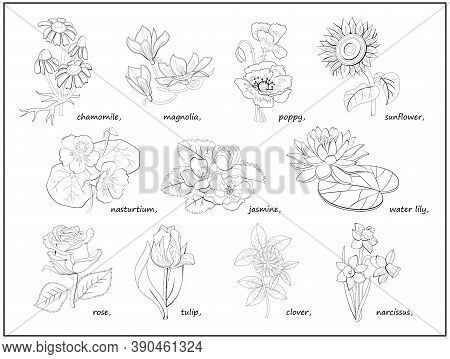 Set Of Black And White Illustrations With Different Flowers For Coloring Book. Worksheet For Childre