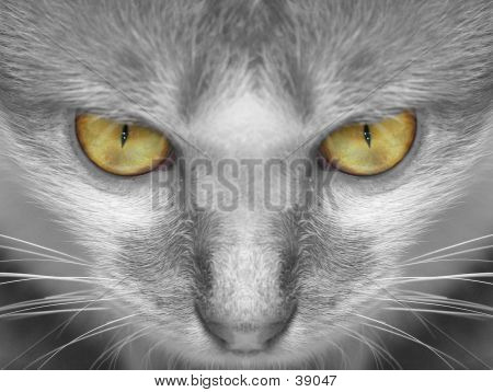 poster of close-up of cat's facial feature