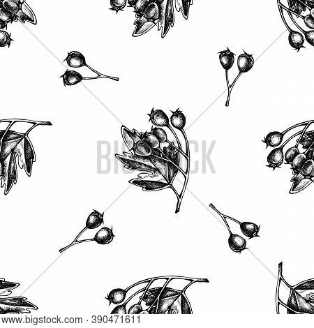 Seamless Pattern With Black And White Hawthorn Stock Illustration