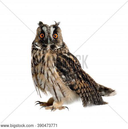 Beautiful Eagle Owl On White Background. Predatory Bird