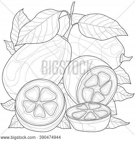 Kumquat. Fruit.coloring Book Antistress For Children And Adults. Illustration Isolated On White Back