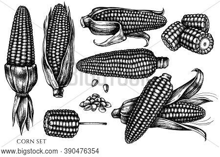 Vector Set Of Hand Drawn Black And White Corn Stock Illustration