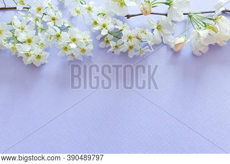 White Flower Border On Pastel Purple Table. Top View, Copy Space. Free Space For Text Or Beauty Prod