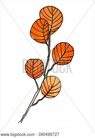 Filbert Branch Colorful Line Art. Realistic Hand Drawn Vector Illustration Of Corylus Maxima, Or Haz