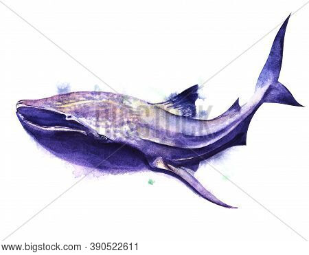 Watercolor Image Of Spotted Whale Shark Of Blue-purple Color On White Background. Hand Drawn Illustr