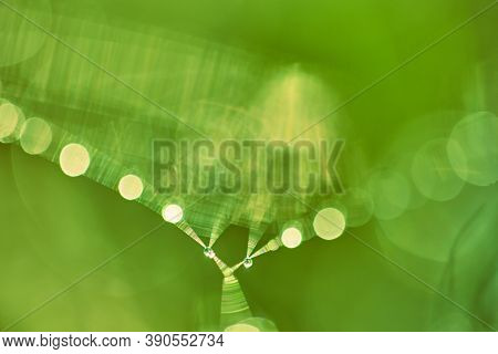 Abstract Blurry Light Green Lime Background With Bokeh. Green Background With Copy Space. Blurred Co