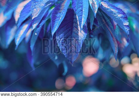 Natural Background In Blue Tones. Abstract Background With Leaves And Bokeh. Big Leaf Nature View In