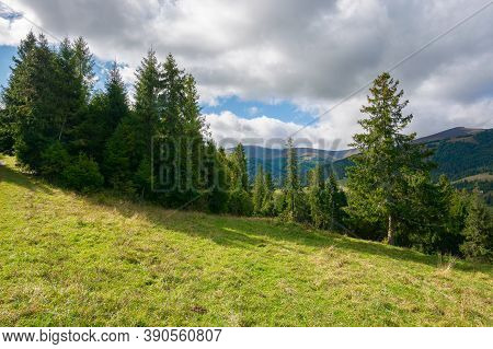 Spruce Forest On The Meadow In Mountains. Sunny Autumn Weather With Clouds On The Sky. Beautiful Car